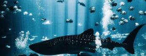 Online Casinos Bonuses better fr fish or whales